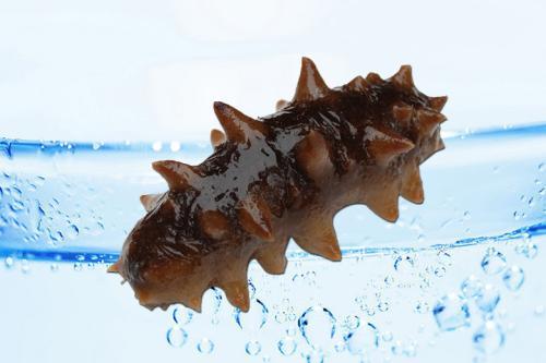 即食俄罗斯海参的价格 第1张-俄罗斯野生海参-俄罗斯红参价格